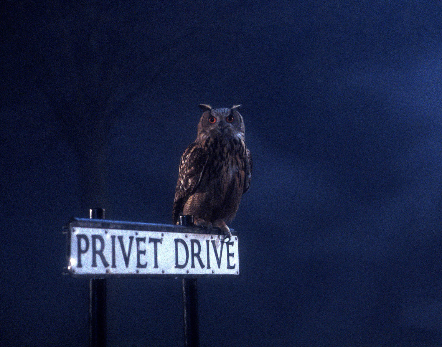 An owl in Privet Drive
