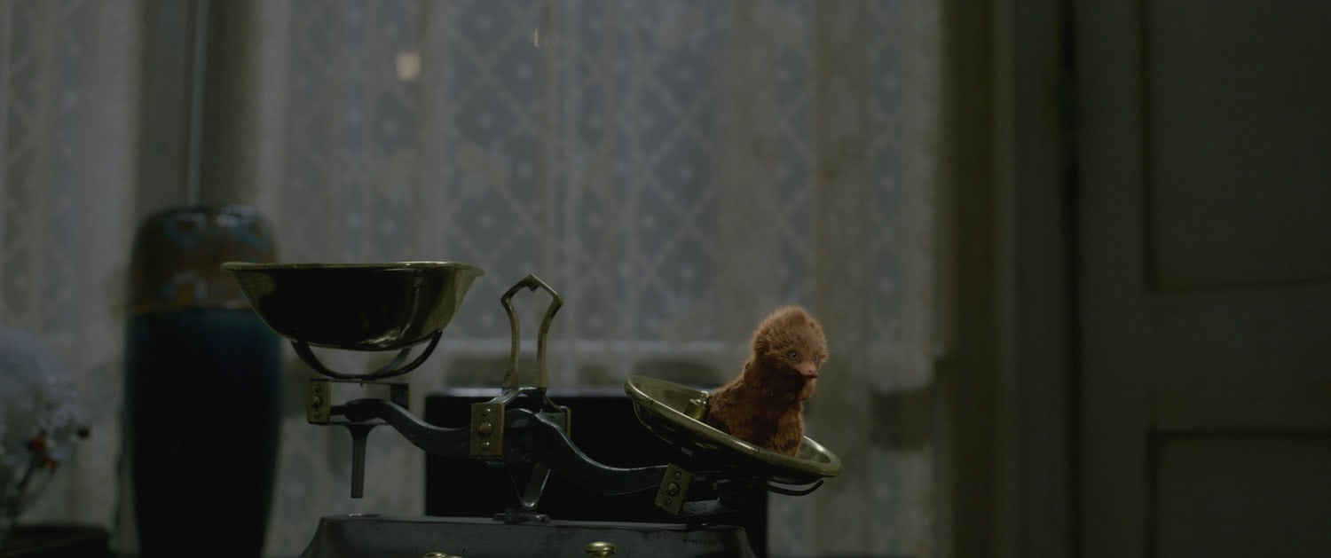Baby Niffler on the scales