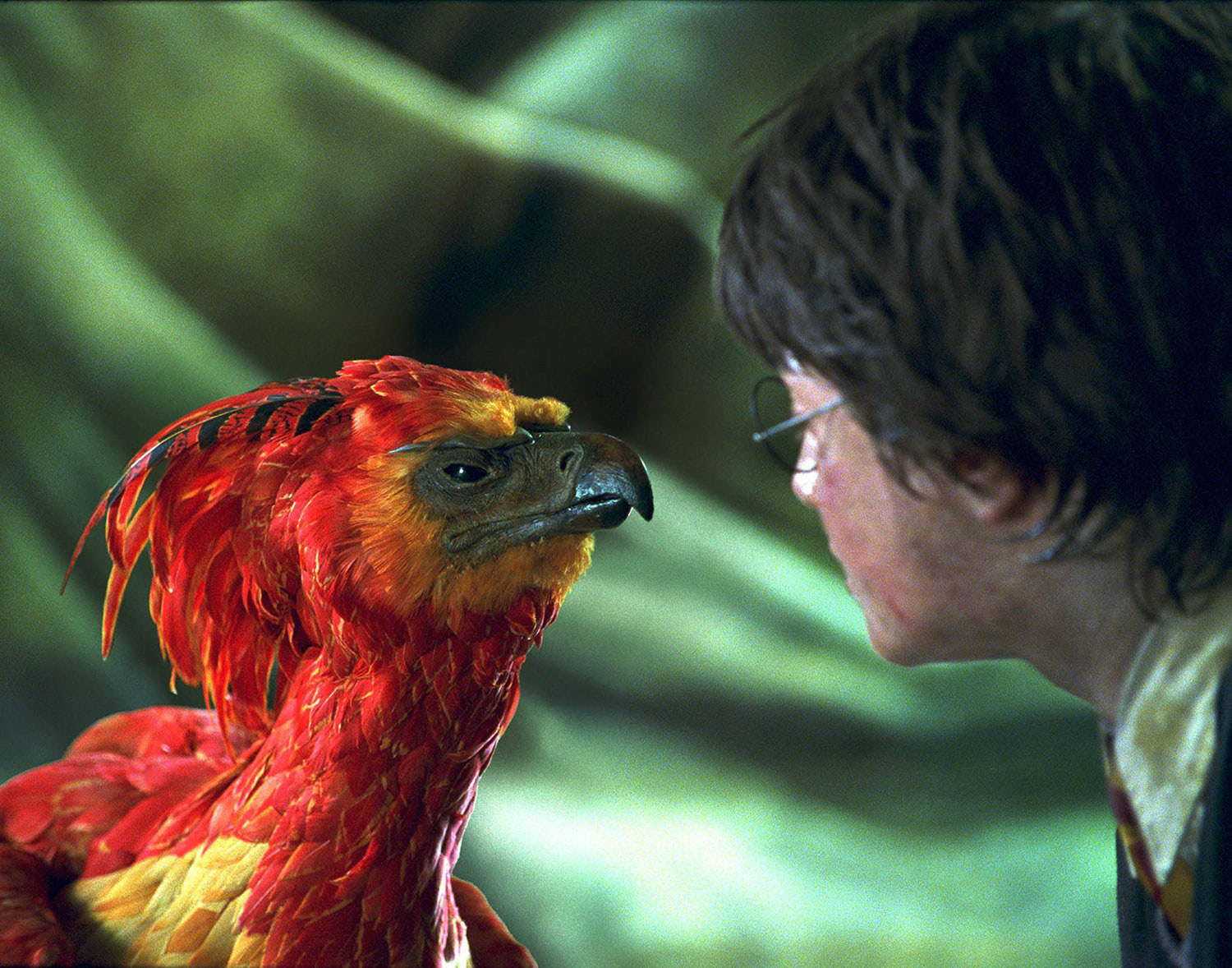 Harry and Fawkes the Phoenix