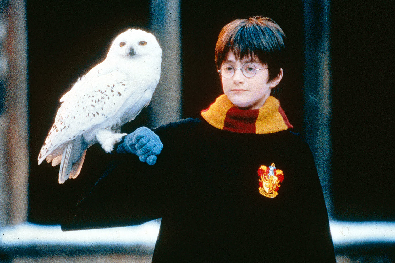 Harry holds Hedwig