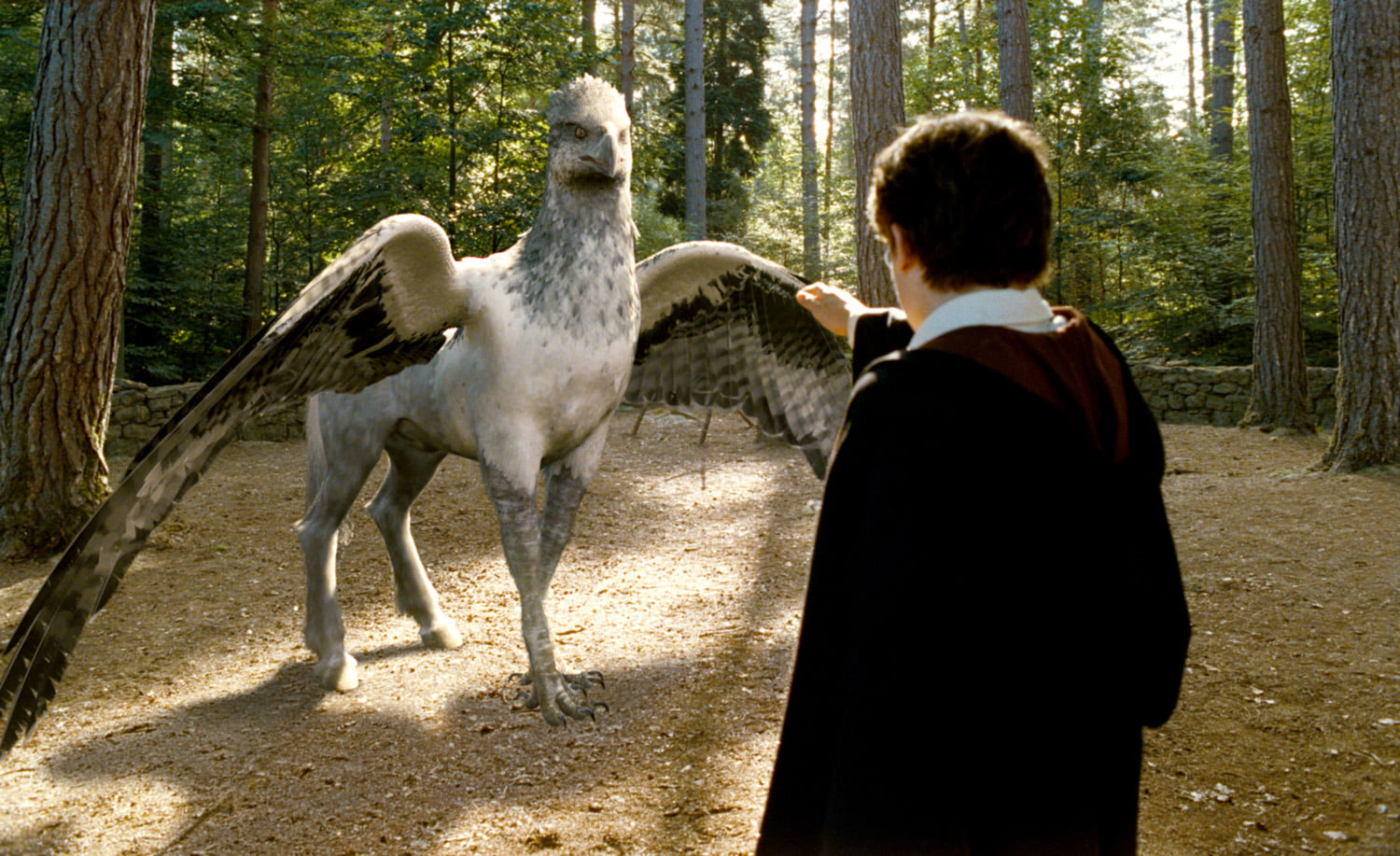 Harry meets Buckbeak