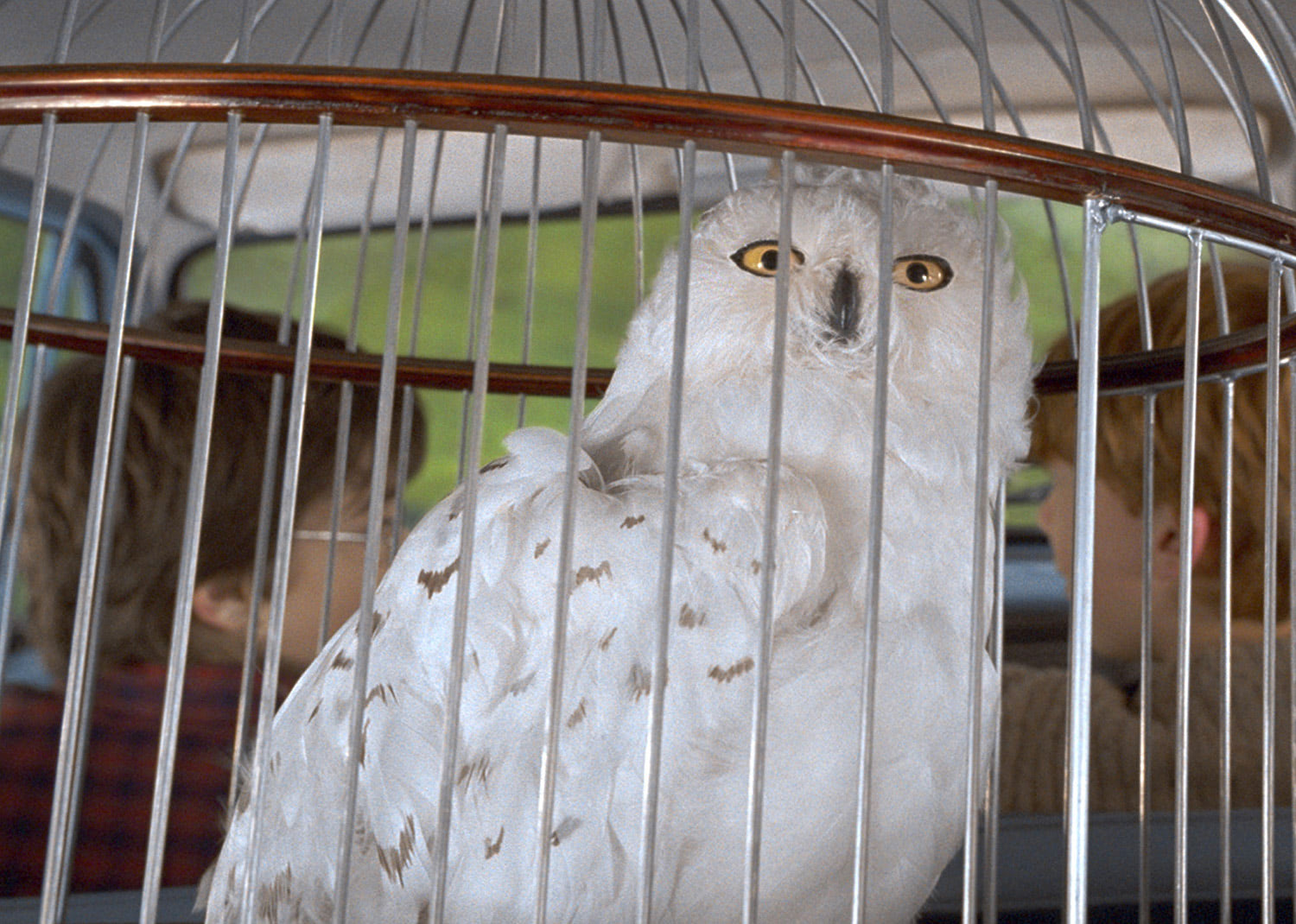 Hedwig in the Ford Anglia