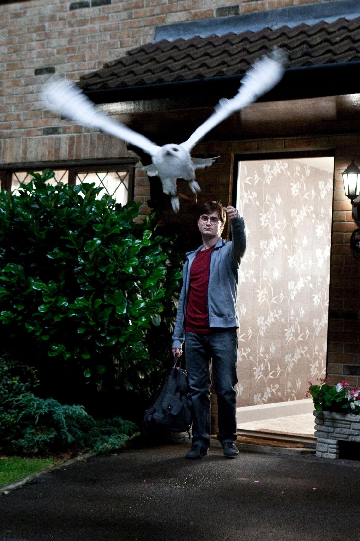 Hedwig leaves Privet Drive