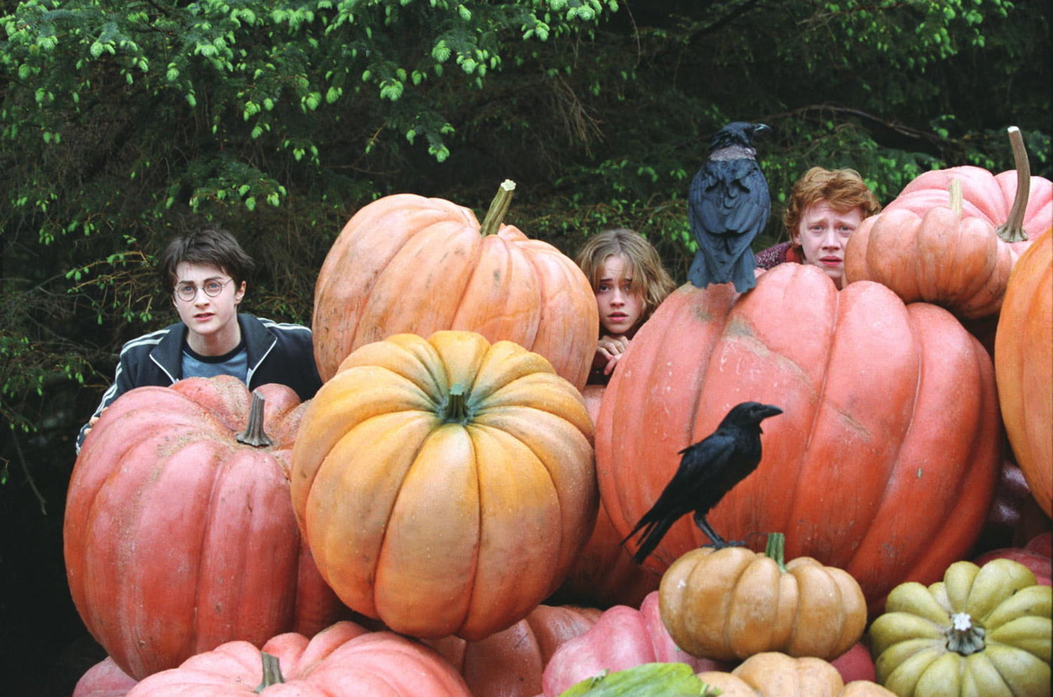 The trio in the pumpkin patch